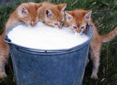 46 проб молока