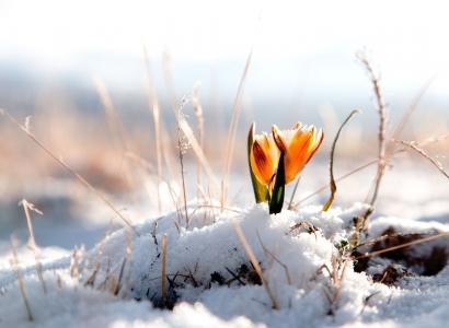 В Омскую область приходит весеннее тепло