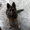 За кражу щенка омичке грозит до двух лет лишения свободы