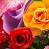 На «Флоре-2015» в Омске из цветов выложат Вечный огонь