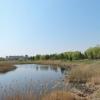 Омичи попросили экс-губернатора благоустроить территорию у озера на Левобережье