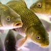 Значение воды для рыб