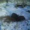 В заказниках Омской области началась подкормка диких животных