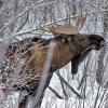 За 5 лет в Омской области численность ценных охотничьих животных выросла в 2,5 раза