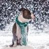 6 ноября в Омске будет тепло, снежно и скользко