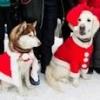 Омичи собрали для бездомных собак 50 кг корма