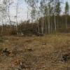 Под Омском незаконно вырубили берез на 113 тысяч рублей