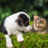Цена на ветеринарные услуги – Petstory