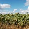 Омские фермеры получат 115 миллионов рублей на развитие хозяйств