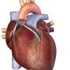 Решают дела сердечные в городской клинической больнице № 4