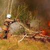 В 12 районах Омской области продлен запрет на посещение лесов