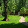 Омские чиновники заставят вырубающих деревья взамен садить крупномеры