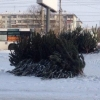 В Омске проверяются места продажи новогодних деревьев