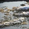 Под тонкий лед реки Омь провалился второклассник