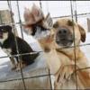 Омский юрист защитил права бродячих животных