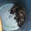 Омич на своем балконе обнаружил семейство летучих мышей