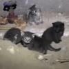 В Омске в подвале многоэтажки заморили голодом кошек с котятами
