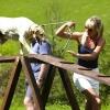 В Омске открылась специальная площадка для выгула собак