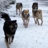 В Омске на 9-летнего мальчика напали собаки