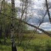В Омской области продолжаются поиски заготовителя березовых веников