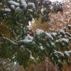 На выходных в Омске ожидается похолодание