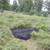 Омичи нашли кусочек асфальта в лесу около нового парка на Московке