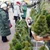 Омичам достанется на треть меньше новогодних ёлок