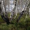 Специалисты Главного  управления лесного хозяйства Омской области ответят на вопросы о защите леса