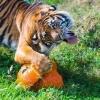 Омичей просят подарить излишки урожая животным Большереченского зоопарка