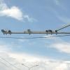 Интеллектуальная камера на омском мосту заработала в полную силу