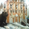 В Омской области охотники причинили ущерб животному миру почти на 1 миллион рублей