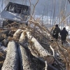 Имена чиновников, крышевавших омских черных лесорубов, так и не названы