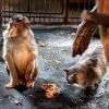 Фоторепортаж из Большереченского зоопарка