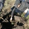 Омские газетчики создали дубовую аллею