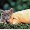 Кошки в законе