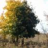 30000 деревьев посадят до конца года