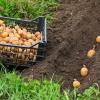 В Полтавском районе Омской области инвалид убил сожительницу из-за посадки картошки