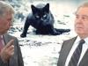 Опять «битва титанов»? Какая кошка пробежала между ними