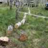 В Омской области загубили более 170 берез