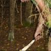 В Омской области незаконно спилили сосен на миллион рублей
