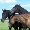 В Омской области из спортивной винтовки убили трех лошадей