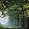 Слет школьных лесничеств стартует в Омской области в пятый раз