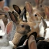 Преимущества разведения кроликов