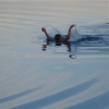 За два месяца лета в Омской области утонули 36 взрослых и 6 детей
