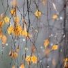 Погода в Омске с 30 октября по 3 ноября