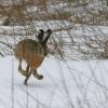 Минприроды Омской области напоминает охотникам о сдаче сведений о добытой дичи