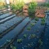 Из-за неполадок с трубой в Омске затопило дачные участки