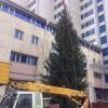 Для установки новогодних атрибутов у омских ТЦ стали подыскивать ели