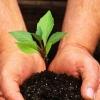 Экологические организации поощрят субсидиями
