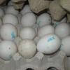 В Омскую область не пустили 36 тысяч яиц из Казахстана